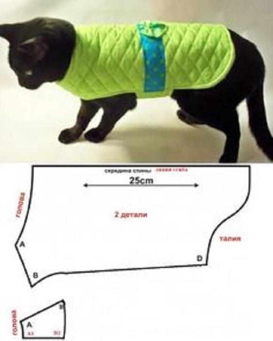 molde para gato mascota
